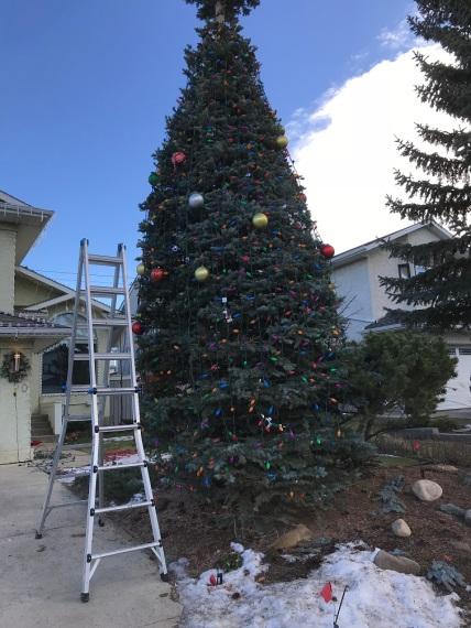 Finished large Spruce
