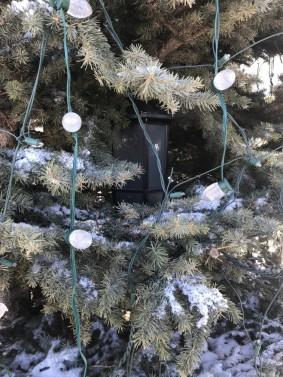 External Speaker Mounted in spruce Tree