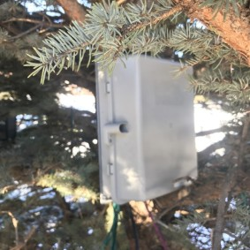 Pixie 16 mounted in Spruce tree
